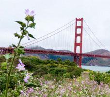 DB Outreach San Francisco