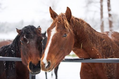 christmascamp-horses
