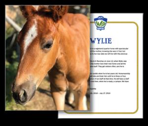 Adopt-A-Horse Certificate